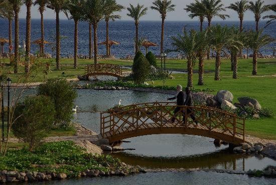 Movenpick Resort Taba Hotel : Jardin