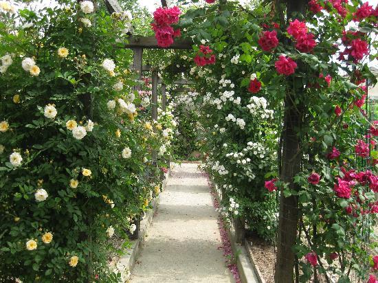 B&B Le Magnolie: rose