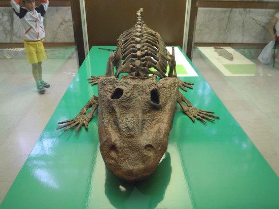 Civico Museo di Storia Naturale : STUPORE