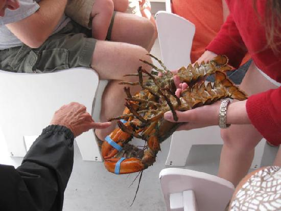 Finestkind Scenic Cruises: Hands on w/ the lobster