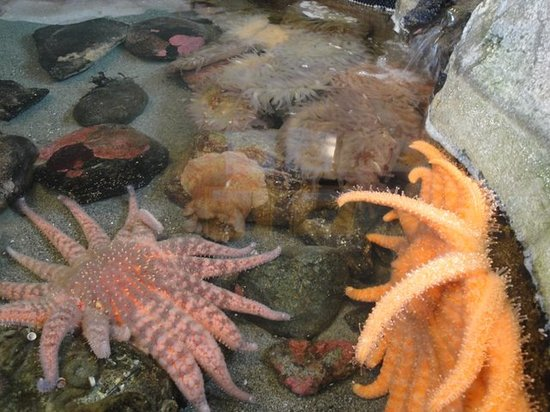 Port Townsend Marine Science Center: Open tanks with sea life.
