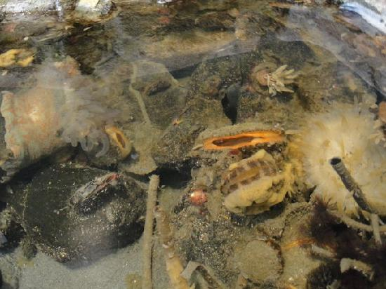 Port Townsend Marine Science Center : Fascinating live in tide pool tanks.