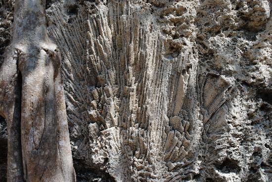 Windley Key Fossil Reef Geological State Park: corals in the quarry walls