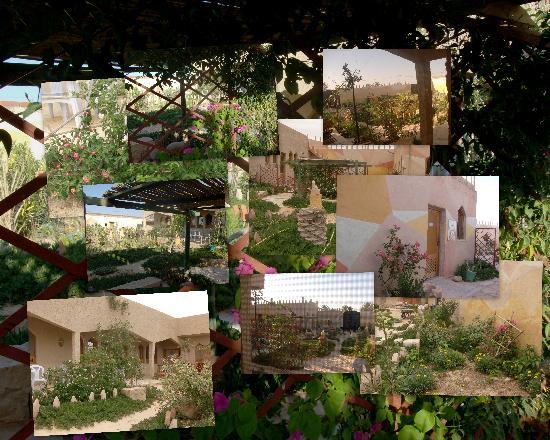 Dar Souleiman : Jardin