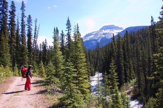 Shadow Lake Lodge: Red Earth Creek trail