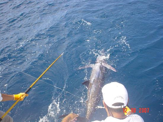 Puerto Vallarta, Mexico: got my 1rst with fishingcharterspv