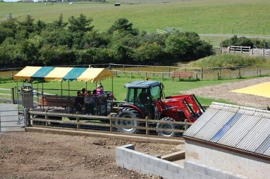 Foel Farm Park: tractor ride to see the horses - queenie being the name of one the white one i think who is very