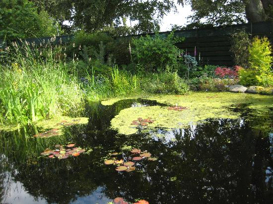 Home Farm Bed & Breakfast: An enchanting Garden and fish pond in back where I enjoyed my afternoon tea.