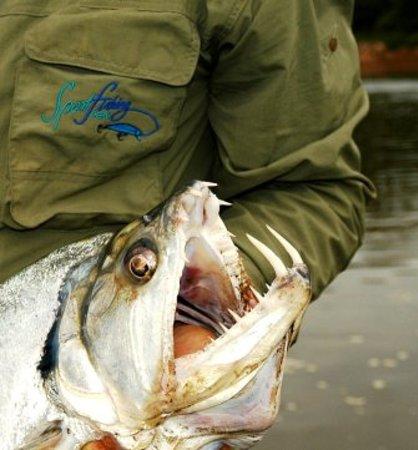 Sportfishing Peru: Payara Fishing at the Amazon Jungle