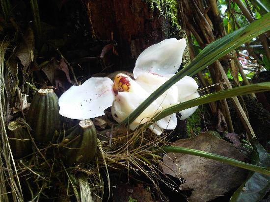 Golfo Dulce Lodge: Im Garten wachsen Orchideen
