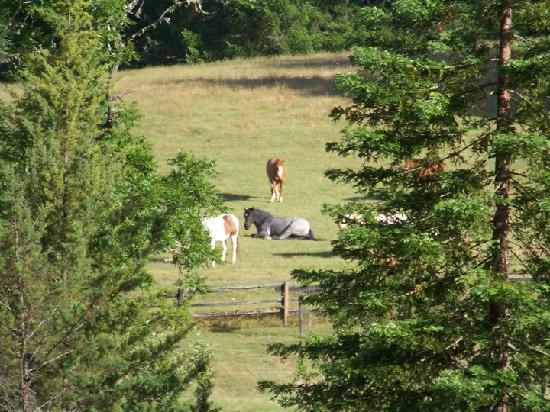 Blackbird Farm: The ranch views beg for exploration.