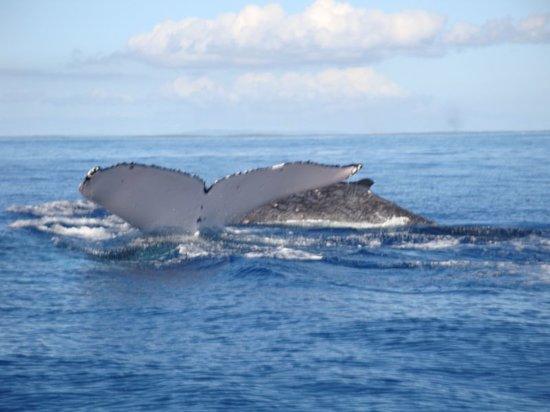 Deep Blue Diving: Goodbye whale