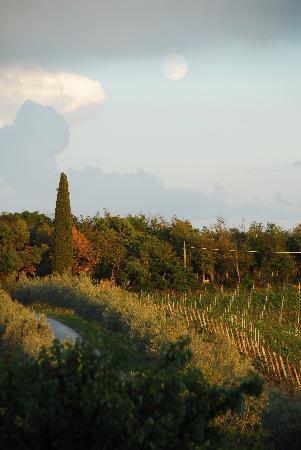 Agriturismo Le Macie: panorama