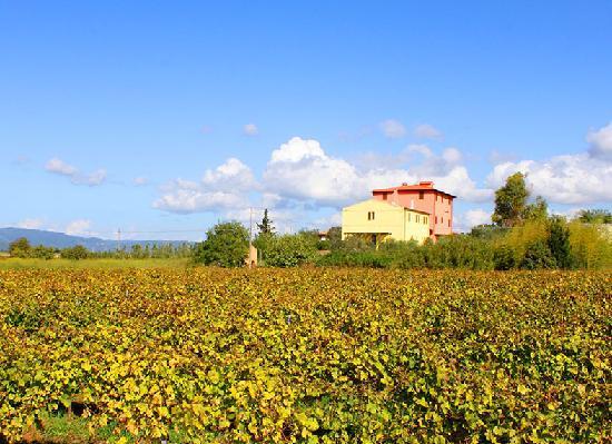Villa Brancatelli: 13e eeuwse villa, gelegen tussen de wijngaarden