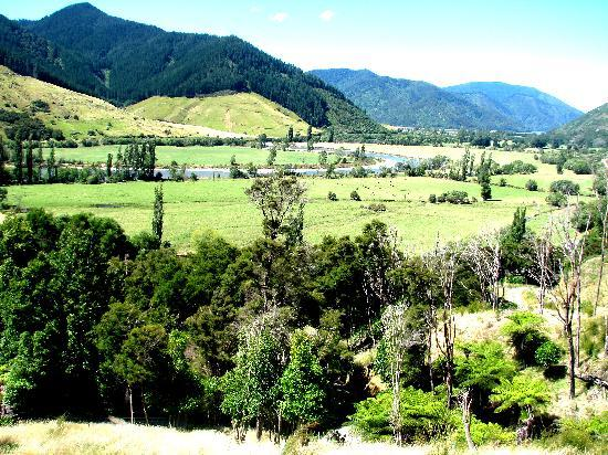 Pelorus Heights Homestay : View from house