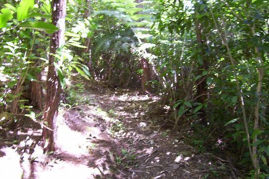 Pelorus Heights Homestay : Native bush walkway in front of house