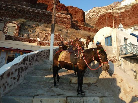 Oia's Sunset Apartments: donkeys that can take you from Ammoudi to Oia (the challenging 250 steps back:)