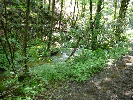 Sugarland Riding Stables: Creek along Sugarlands trail