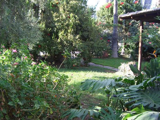 Villa Nahalal: Lucious greenery