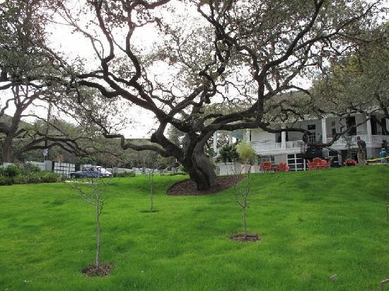 Hotel Saint Cecilia: grounds