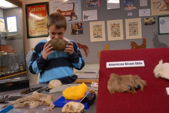 Jefferson City, MO: See some of the largest hairballs ever at the Missouri Veterinary Medical Museum.