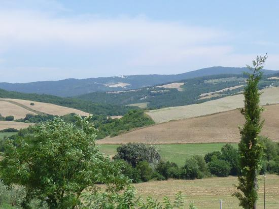 Podere Campaini: The grounds