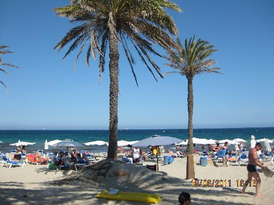 Hotel Club Bahamas Ibiza : The beach