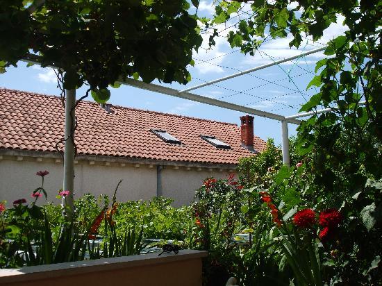 Anna Guesthouse: In the garden
