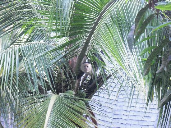 Tulemar Bungalows & Villas: Morning visitors