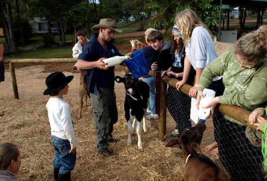 Malanda Falls Caravan Park: Childrens farm