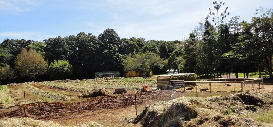 Malanda Falls Caravan Park: communal vegetable gardens