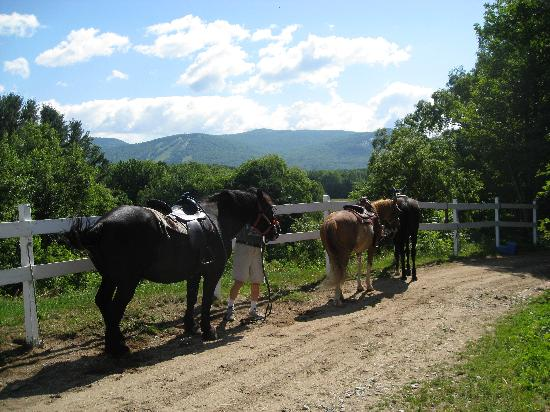 Farm by the River Bed and Breakfast with Stables: horses getting ready