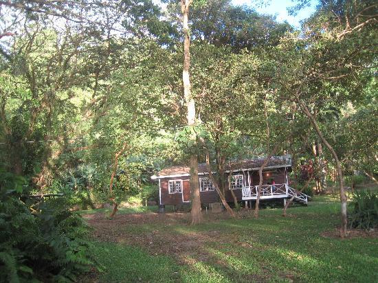 Man-O-War Bay Cottages : The nearest cabin