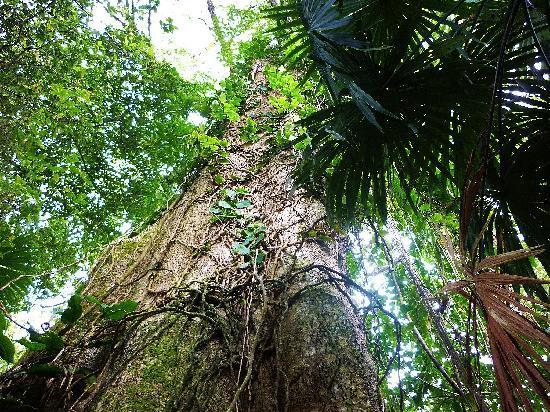 Cabinas Yamann: Im Dschungel