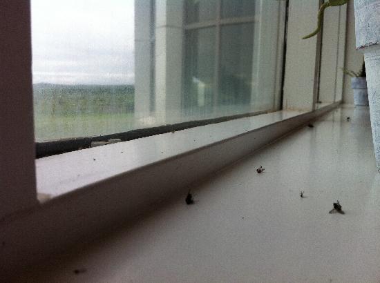 Hotel Edda - IKI Laugarvatn: Vous avez de nouveau amis... !