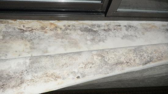 Comfort Suites South Burlington: More mold