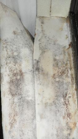 Comfort Suites South Burlington: Still more mold