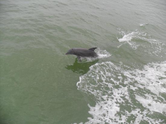 Captiva Cruises: Dolphins swimming alongside