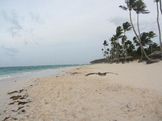 Grand Palladium Punta Cana Resort & Spa : playa hotel