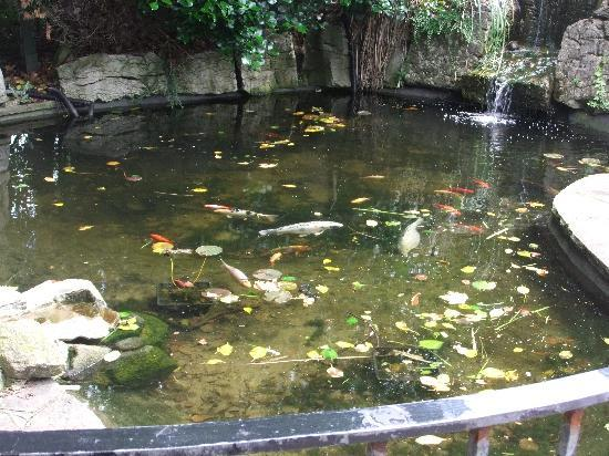 Fish pond at hotel picture of briars hall country house for Koi pool blackpool
