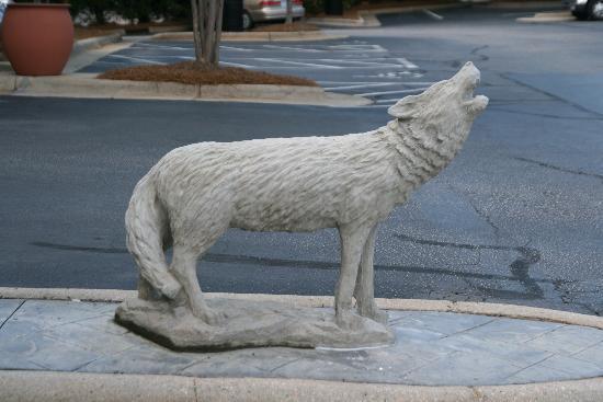 Comfort Inn & Suites Crabtree Valley: Wolfpack Pride