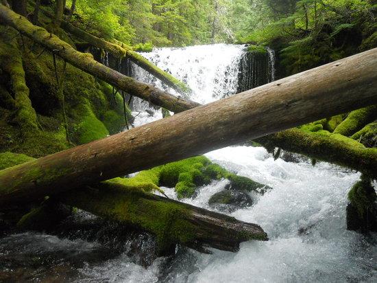 Gifford Pinchot National Forest Washington United States