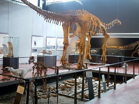 Les Marguerites : Le musée des dinosaures