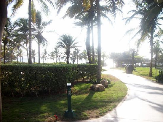 Isla Caribe Beach Hotel: Camino a la playa