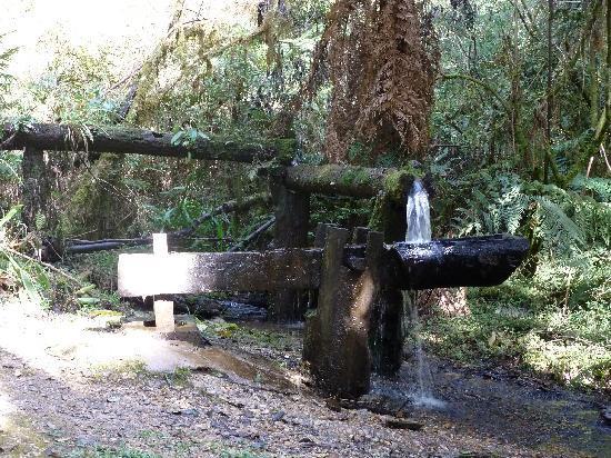 Parque Ecologico Ouro Fino: Durch den Urwald
