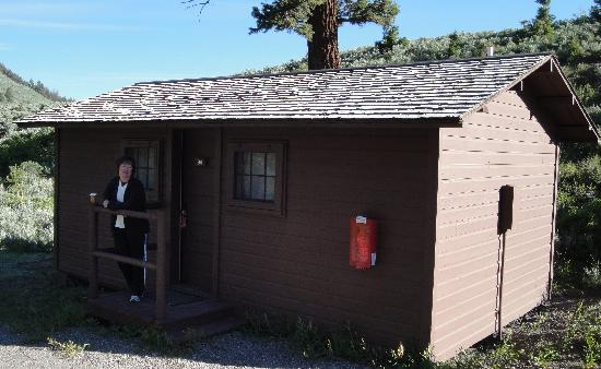 Bear strolling through cabin area picture of roosevelt for Cabin yellowstone park