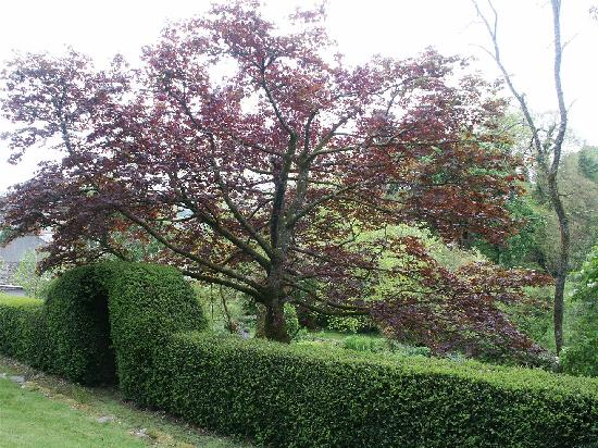 Abercelyn Country House: Abercelyn garden - maple tree and arch