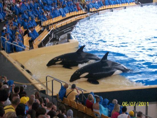 Holiday Village Tenerife: killer whales are loral parque
