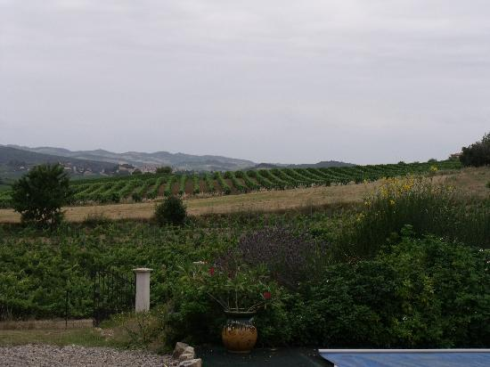 B & B in Limoux at Domaine St George: The neighbours vinyard