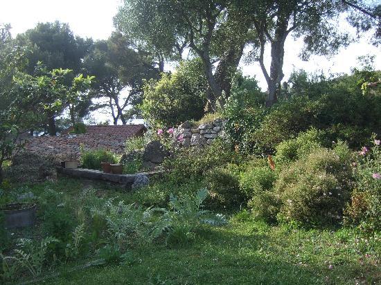 La Vieille Bergerie: garden4